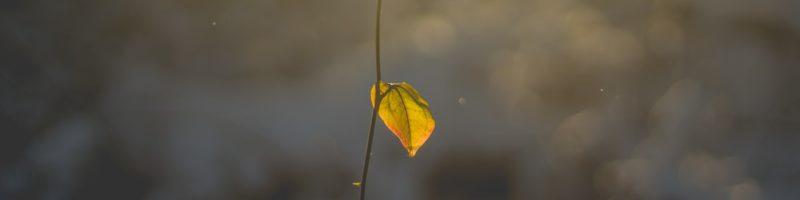 Single Leaf on Branch